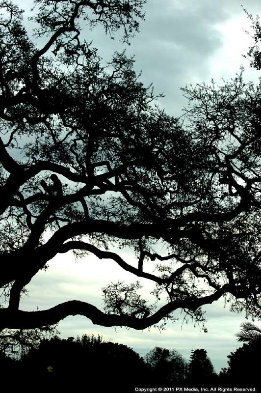 photography-0094pxm
